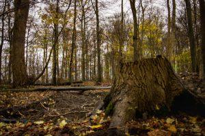 Odense tree  Underground sea
